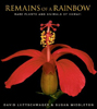 Remains of a Rainbow: Rare Plants and Animals of Hawaii Book